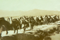 Mule train and porters